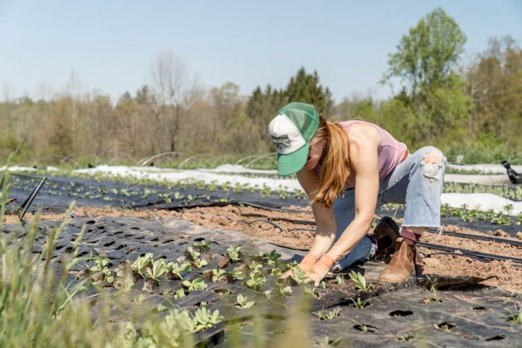 Køb kun en kolonihave hvis du elsker at arbejde i haven